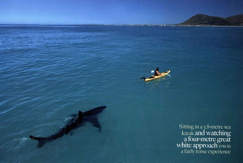 great-white-shark-kayak
